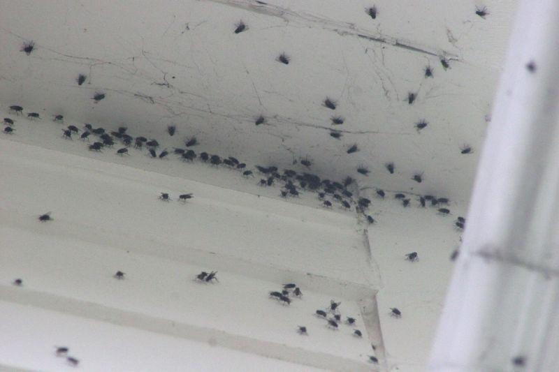 Como eliminar la humedad de una casa elegant eliminar - Como evitar la humedad en casa ...